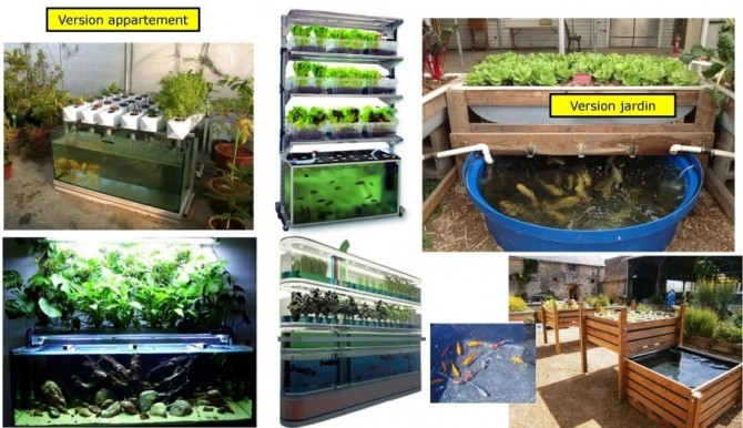 Aquaponie domestique: - Aquaponic Management Project